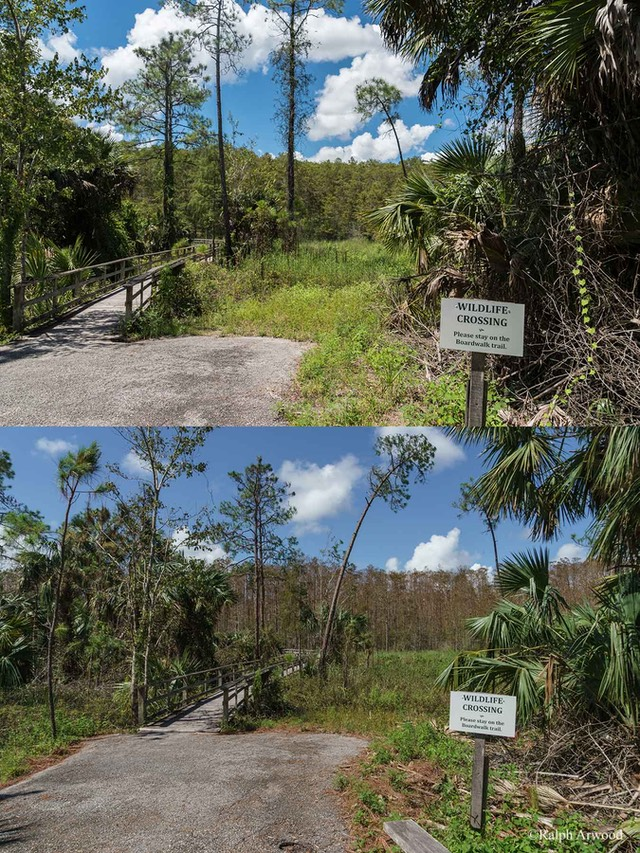 Irma-Before-After-69e